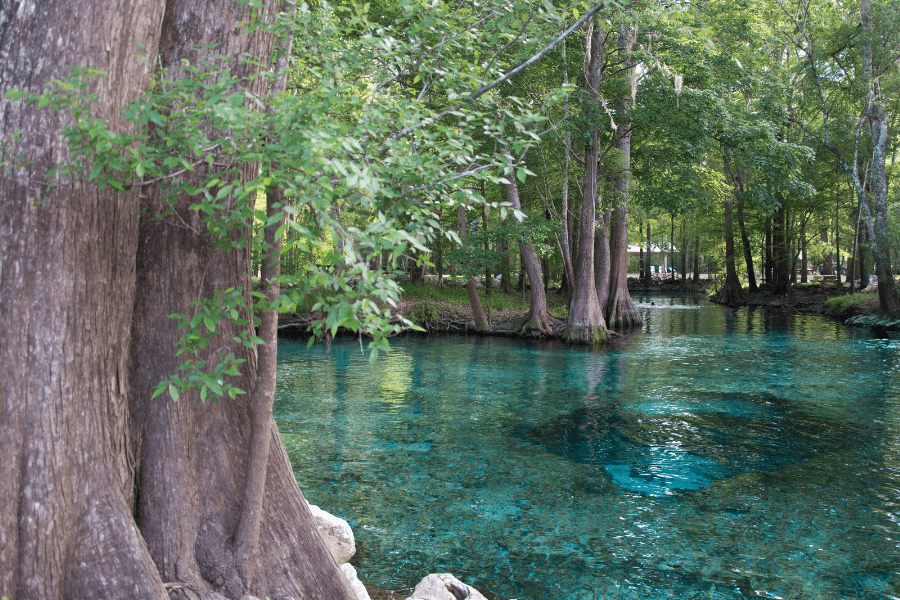 Explore Florida's Springs In July